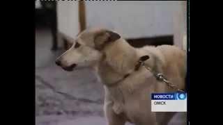 День защиты животных в приюте