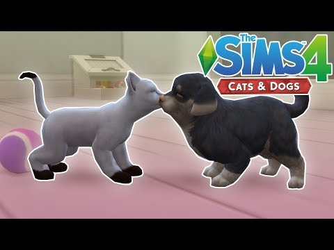 Another Pet! - The Sims 4: Cats & Dogs - Ep.2