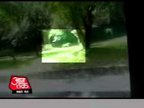 Tiger kills a child in zoo live video