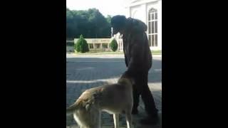 Бомж изнасиловал собаку