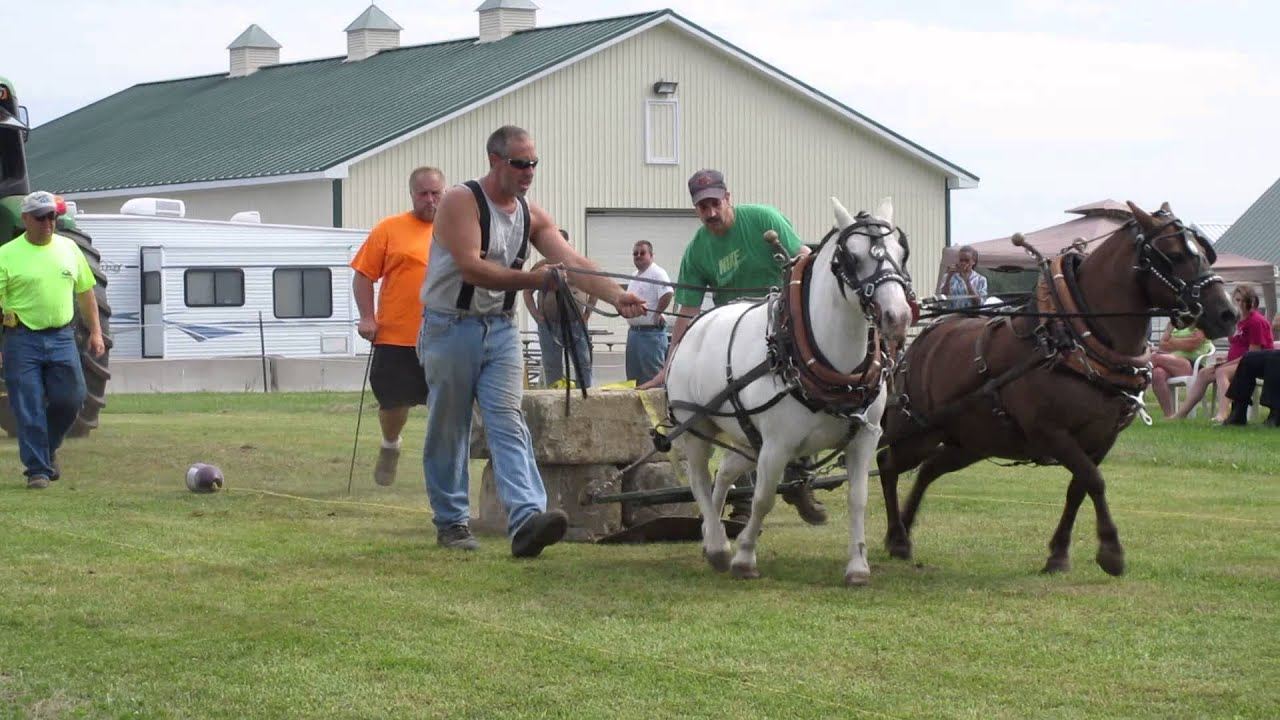 Miniature Horse Pull At Slpem