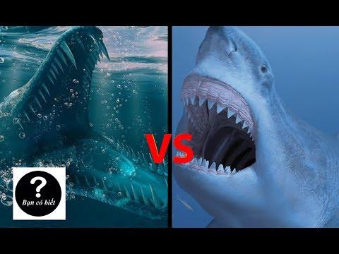Megalodon vs Mosasaurus, con nào sẽ thắng #22 || Bạn Có Biết?