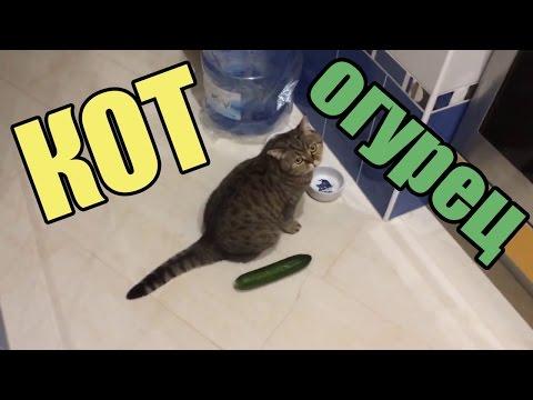 КОТЫ И ОГУРЦЫ!!! Коты боятся огурцов!!! САМАЯ ЛУЧШАЯ ПОДБОРКА - Видео с YouTube на компьютер, мобильный, android, ios