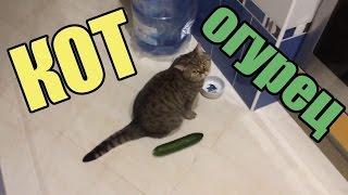 КОТЫ И ОГУРЦЫ!!! Коты боятся огурцов!!! САМАЯ ЛУЧШАЯ ПОДБОРКА