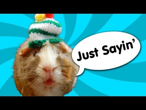 Guinea Pig Speaks Out - Ricky Gervais