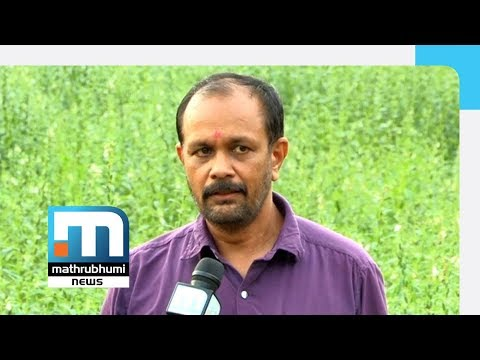 Asokan Succeeds In Sesame Farming After Mundakan Season| Mathrubhumi News