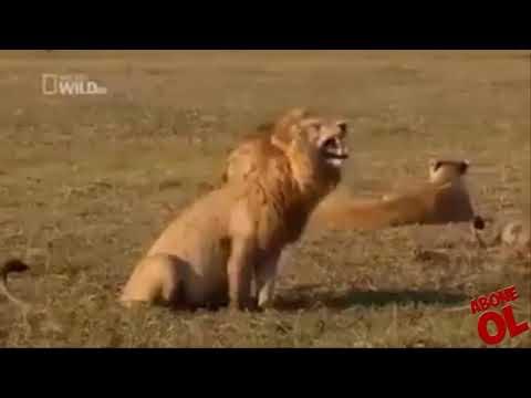 Çok komik hayvan dublajları Tayfun Yılmaz & diğerleri