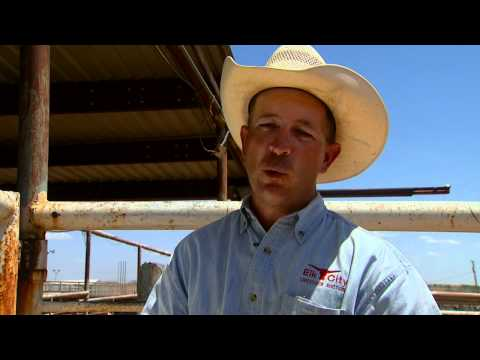 Oklahoma Drought: A New Generation - The Cattle Industry & Drought