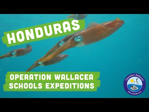 Operation Wallacea - Honduras Schools Expeditions