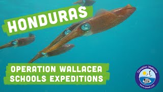 Operation Wallacea - Honduras Schools Expeditions