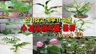 인기많고 키우기 쉬운 수경재배식물 종류 10가지 ( T…