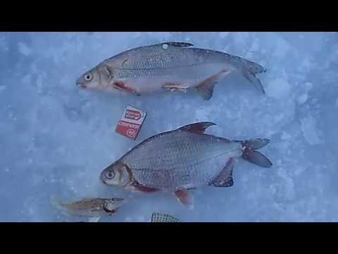 елец рыбалка липецкая область