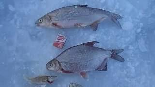 зимняя рыбалка в Липецкой области на Дону  январь 2016г. Сом_Елец(Зимняя рыбалка на реке Дон, в январе 2016 года., 2016-10-09T15:04:25.000Z)