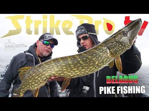 Strike Pro TV - Northern Pike Fishing in Belarus