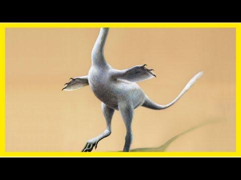 Meet the 'halszka,' a new dinosaur that mixes duck, croc, ostrich and swan