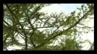 В.Леонтьев - Ты стала другой - клип на песню.avi