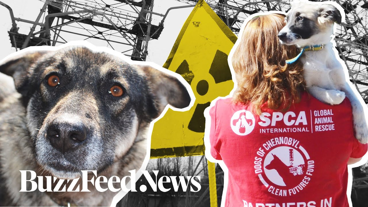 Chernobyl Nuclear Disaster Puppies Are Being Adopted By US