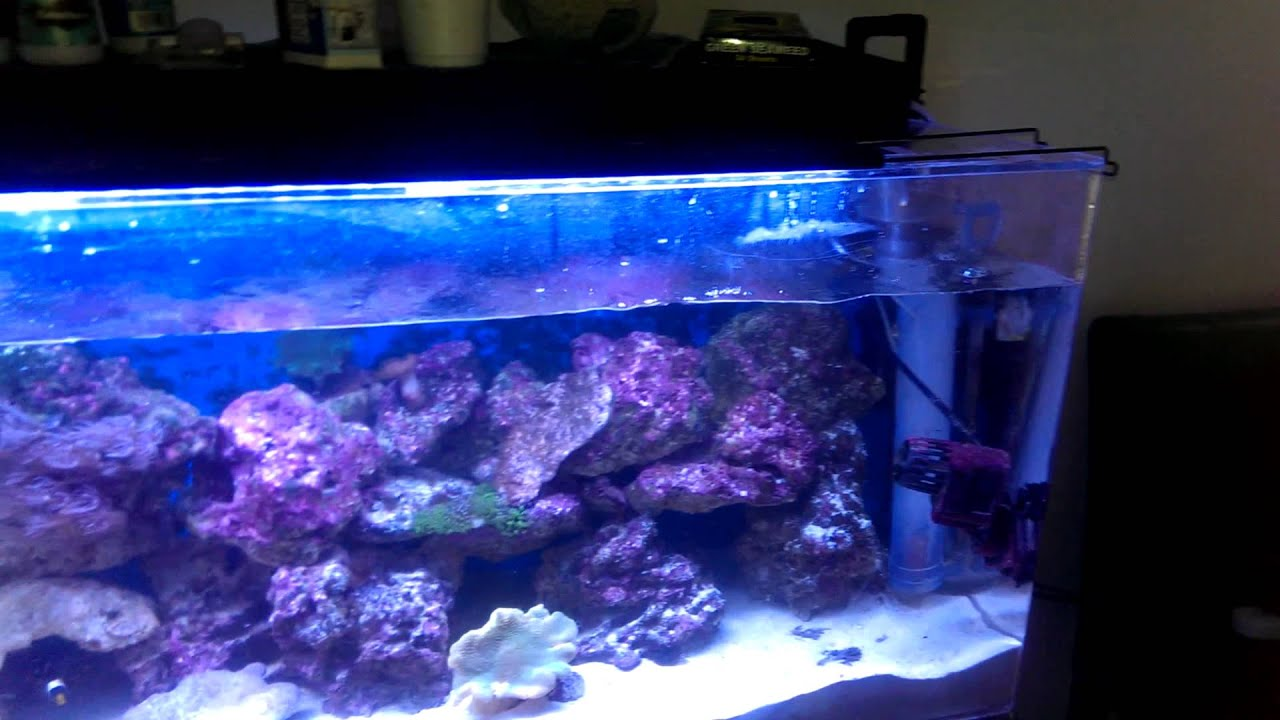 My 55 Gallon Clear For Life Reef Tank 1 Year Later