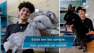 Estudiante mexicano cría los conejos más grandes del mundo en Puebla