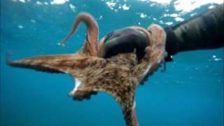 cyprus limassol spearfishing octapus.wmv