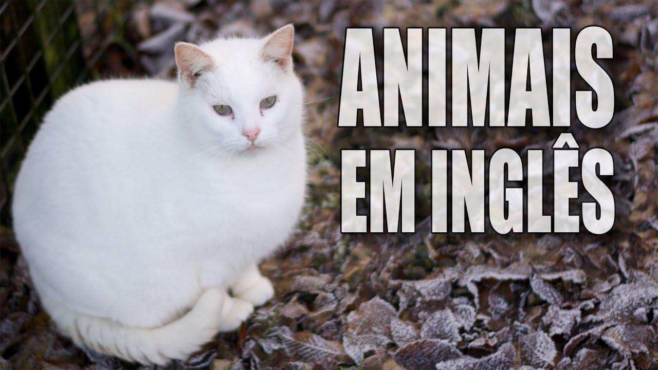 Aula De Inglês. Aprender Os Animais Com Tradução Português