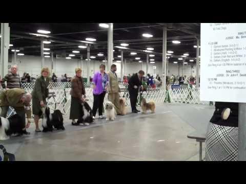 Bay Colony Tibetan Terrier Club April 4, 2015