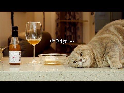 취한다 취해 고양이전용 와인마시기