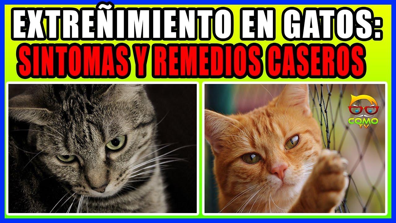 el gato no puede orinar en remedio casero
