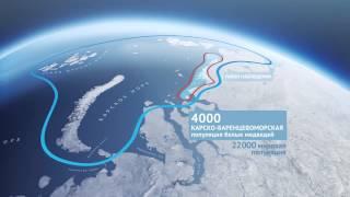 Норильский никель // 80 лет в российской Арктике