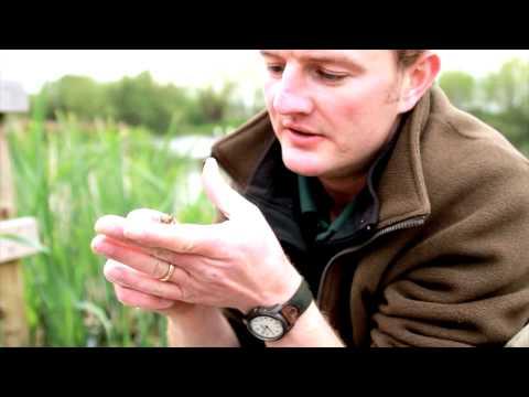 British Wildlife: Pond Dipping