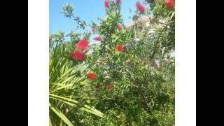 #bee #echinachea #amroth #flowers