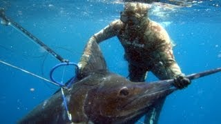 Download Video Spearfishing One Fish MP3 3GP MP4