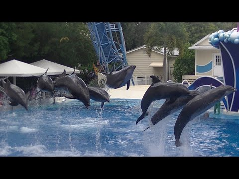 Blue Horizons featuring Pilot Whales - Aug 19 2015 - SeaWorld Orlando