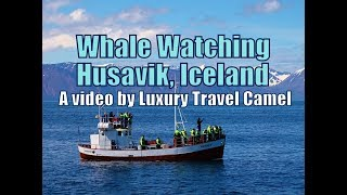 Video Whale Watching in Husavik, Iceland -- a tour by North Sailing download MP3, 3GP, MP4, WEBM, AVI, FLV Desember 2017