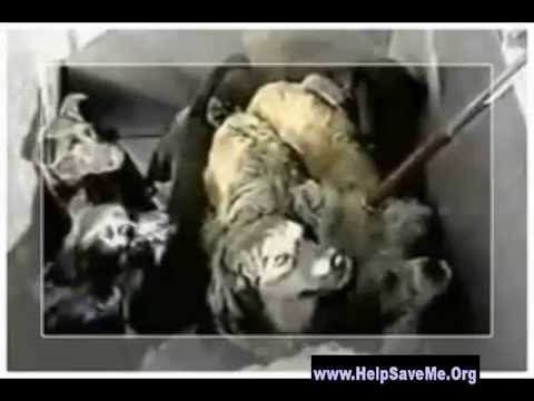 Gassing Dogs to Death - Horrible form of euthanasia
