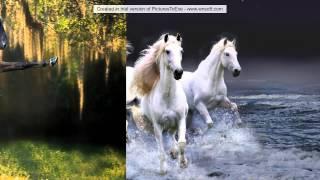 Красивая музыка Арабатский конь