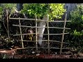 Making A Wattle Trellis