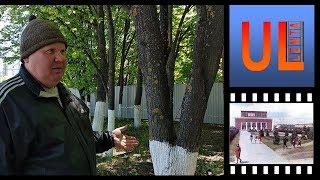 Житель Засвияжья о ситуации в сквере ДК УАЗ Забор #срочно убирать! Ульяновск против застройки сквера