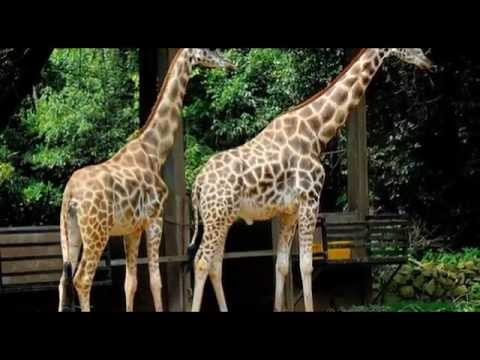 Malacca Zoo - Tourist Attractions in Malaysia