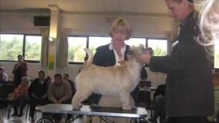 Club Match Cairn Terrier.wmv