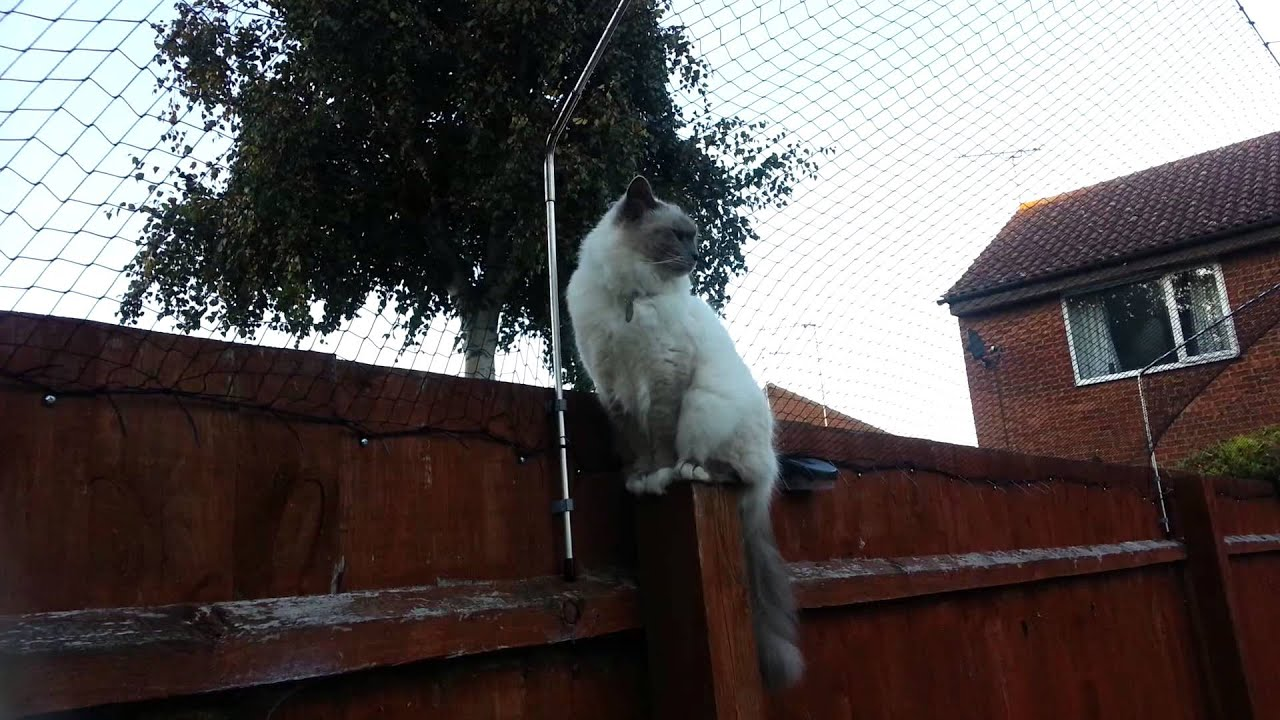 Cat fence is in place Secura cat