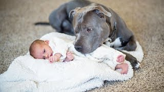 Er sagt seiner Frau, der Pitbull muss weg. Doch dann macht der Hund DAS und verändert damit alles!