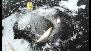 Зимняя рыбалка на Амуре первая в сезоне 15 11 2020 сиг на хапугу