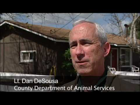 COUNTY ANIMAL SERVICES RAIDS DOG RESCUE GROUP