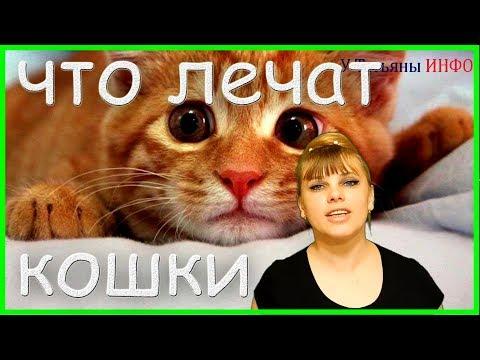 Вопрос: Как лечат кошки?