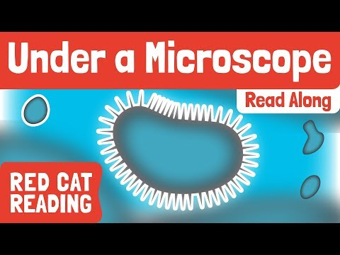 Under A Microscope | Science For Kids | Made By Red Cat Reading