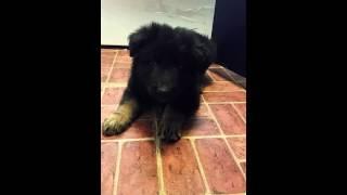 Puppy Training To Bark/quiet