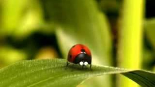 La vie privée des insectes - Catapulte