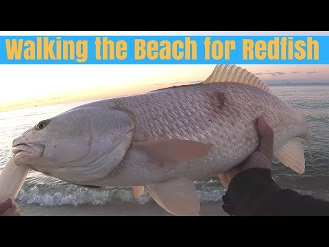 Walking The Beach For Redfish - Surf Fishing Gulf Shores Alabama