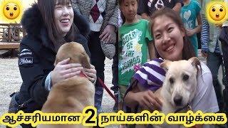 Baixar இரண்டு நாய்களின் வாழ்க்கை || amazing dog lifestyle || Tamil Galatta News